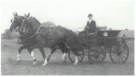 De Roemrijke Geschiedenis Van Het Ostfriese Paard